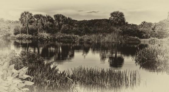 Peaceful Waters Wetlands